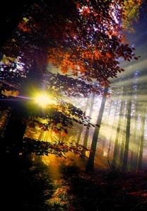 apus-de-soare-în-pădure-wallpapers_35160_1920x1200