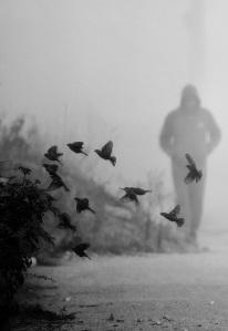in natura printre pasari alb negru