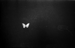 black-and-white-butterfly-Favim.com-718598